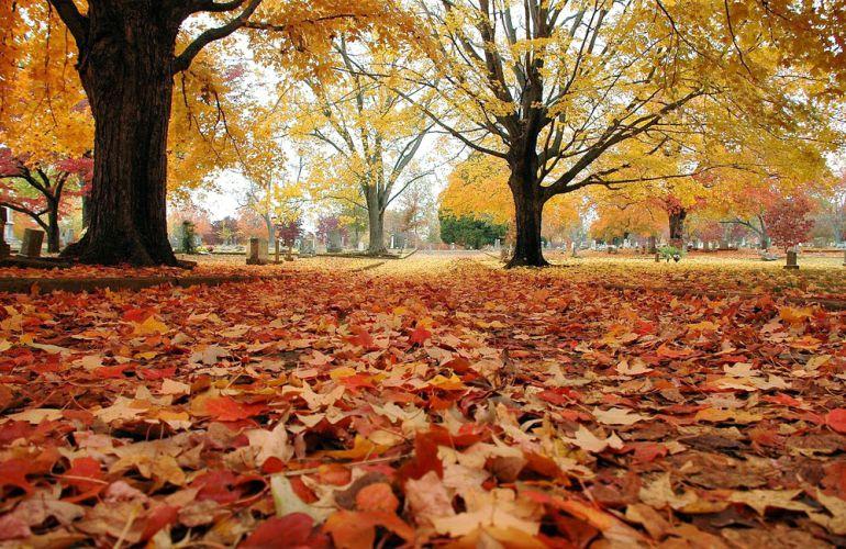 Outono Colorimetria