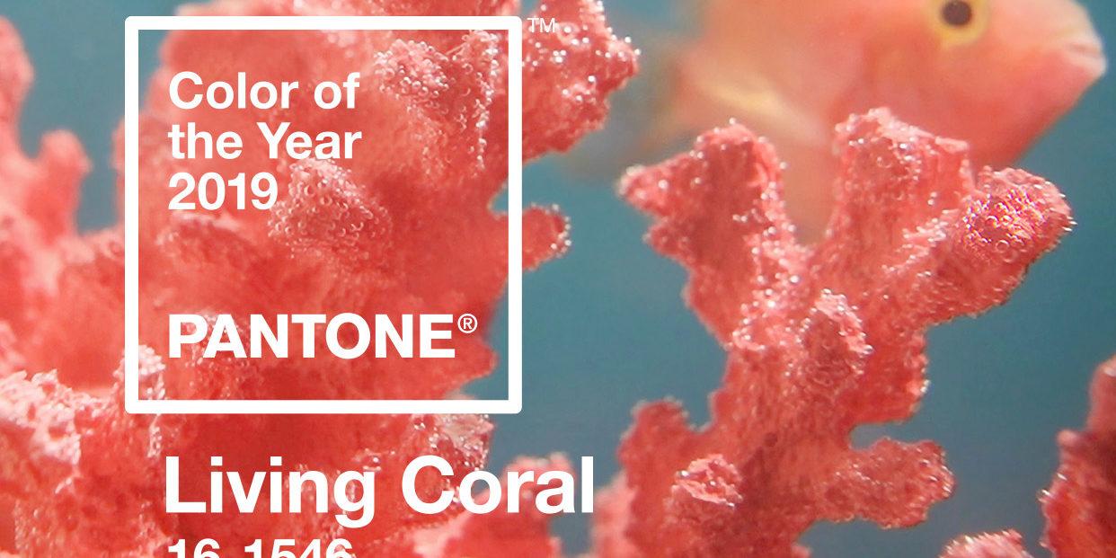 Resultado de imagem para Cor do ano da Pantone LIVING CORAL (Coral Vivo)